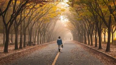 Road Girl Trees Walk Fog Pavement  - 강춘성 / Pixabay