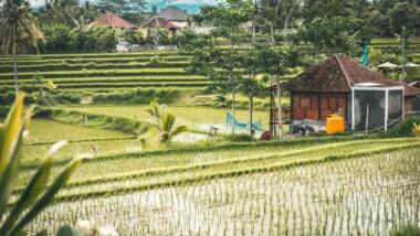 Bali Indonesia Asia Travel Nature  - palinska / Pixabay